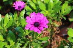 Beautiful flowers in royal park rajapruek. Stock Image