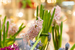 Beautiful flowers are on sale in the store Stock Images