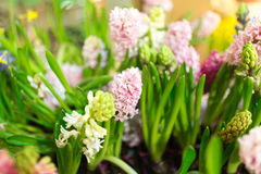 Beautiful flowers are on sale in the store Stock Photo