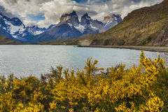 Beautiful flowers on the shore of the mountain lake. Stock Photography