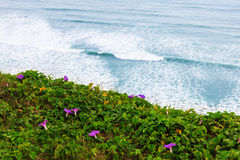 Beautiful flowers on the shore Royalty Free Stock Photos