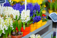 Beautiful flowers sold on outdoor flower shop Stock Image