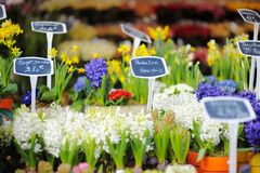 Beautiful flowers sold on outdoor flower shop Stock Photos