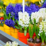 Beautiful flowers sold on outdoor flower shop Stock Images