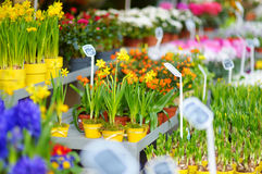 Beautiful flowers sold on outdoor flower shop Royalty Free Stock Photo