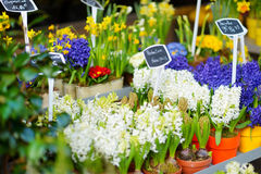 Beautiful flowers sold on outdoor flower shop Stock Photography