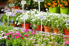 Beautiful flowers sold on outdoor flower shop Royalty Free Stock Images