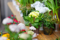 Beautiful flowers sold on outdoor flower shop Royalty Free Stock Photography