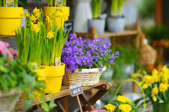 Beautiful flowers sold on outdoor flower shop Royalty Free Stock Image