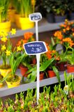 Beautiful flowers sold on outdoor flower shop Royalty Free Stock Photos