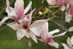 Beautiful Flowers in Spring stock images