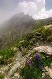 Beautiful flowers on Steep slope of rocky hillside Stock Photos