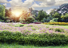 Beautiful flowers in the Suan Luang Rama IX Public Park. For design work Stock Images