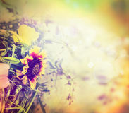 Beautiful flowers in sun blure, autumn or summer nature background Stock Images