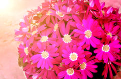 Beautiful flowers on sunny background Stock Images