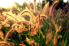 Beautiful Flowers at sunrise Royalty Free Stock Image