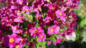 Beautiful flowers stock video