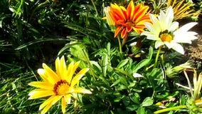 Beautiful flowers stock video footage