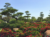 Beautiful flowers and trees in Japanese Garden.  Royalty Free Stock Images