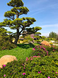 Beautiful flowers and trees in Japanese Garden.  Stock Image