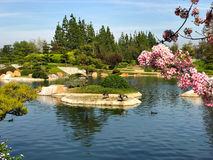 Beautiful flowers and trees in Japanese Garden.  Stock Images