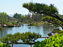 Beautiful flowers and trees in Japanese Garden.  Royalty Free Stock Photo