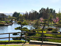 Beautiful flowers and trees in Japanese Garden.  Stock Photography