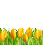 Beautiful Flowers Tulips Isolated. Illustration Beautiful Flowers Tulips Isolated on White Background, Spring Nature Wallpaper - Vector stock illustration