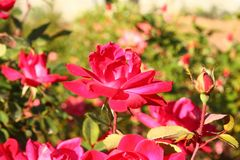 The beautiful flowers under the sunshine Royalty Free Stock Images