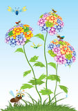 Beautiful flowers. Vector. Stock Images