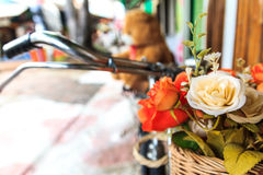 Beautiful flowers on vintage bicycle Stock Images