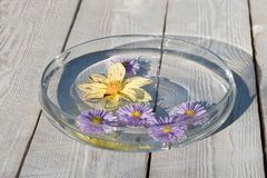 Beautiful flowers in the water royalty free stock image