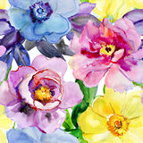 Beautiful Flowers, Watercolor Illustration. Royalty Free Stock Image