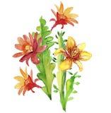 Beautiful flowers, watercolor illustration Royalty Free Stock Photo