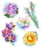 Beautiful flowers, watercolor painting Stock Image