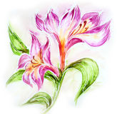 Beautiful flowers. Watercolor painting Royalty Free Stock Image