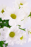 Beautiful flowers on white background. Closeup of bunch of beautiful white flowers on white background Stock Image