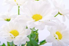 Beautiful flowers on white background Stock Image