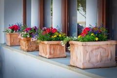 Beautiful flowers on the windows ina Austrian village Rust.  Royalty Free Stock Photos