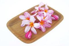 Beautiful flowers in wood tray Royalty Free Stock Photography