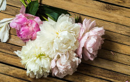 Beautiful flowers on wooden background, various , place for text, closeup royalty free stock photo