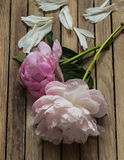 Beautiful flowers on wooden background, various , place for text, closeup stock photography