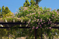 Beautiful flowers on a wooden pergola Royalty Free Stock Images