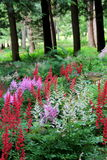 Beautiful flowers in a woodsy garden Stock Images