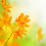 Beautiful Flowers yellow Border. Floral design Stock Photography
