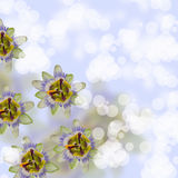 Beautiful flowes Stock Images