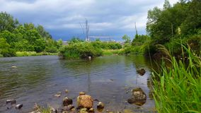 Beautiful flowing river with dragonfly flying over water. View from river shore in the summer with insect flying stock video footage