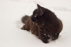 Beautiful fluffy black cat with yellow eyes on white snow winter Stock Images
