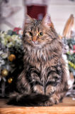 Beautiful fluffy brown striped cat Stock Photo