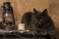 Cat with kerosene lamp and candle stock photo